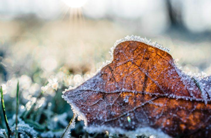 mooie tuin in de winter